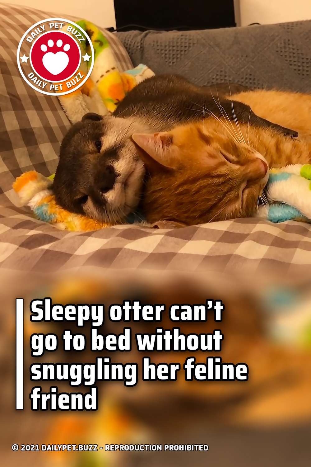 Sleepy otter can't go to bed without snuggling her feline friend