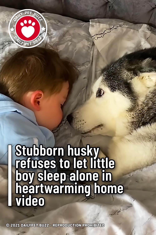 Stubborn husky refuses to let little boy sleep alone in heartwarming home video