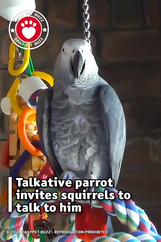 Talkative parrot invites squirrels to talk to him