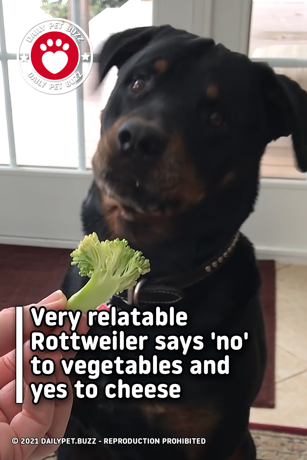 Very relatable Rottweiler says \'no\' to vegetables and yes to cheese