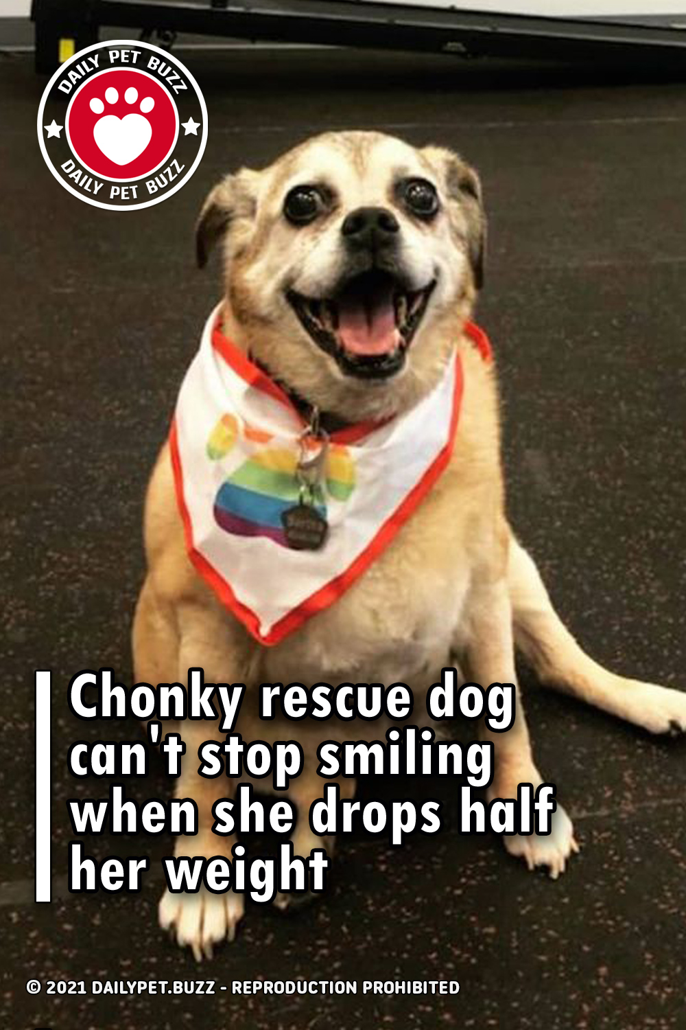 Chonky rescue dog can\'t stop smiling when she drops half her weight