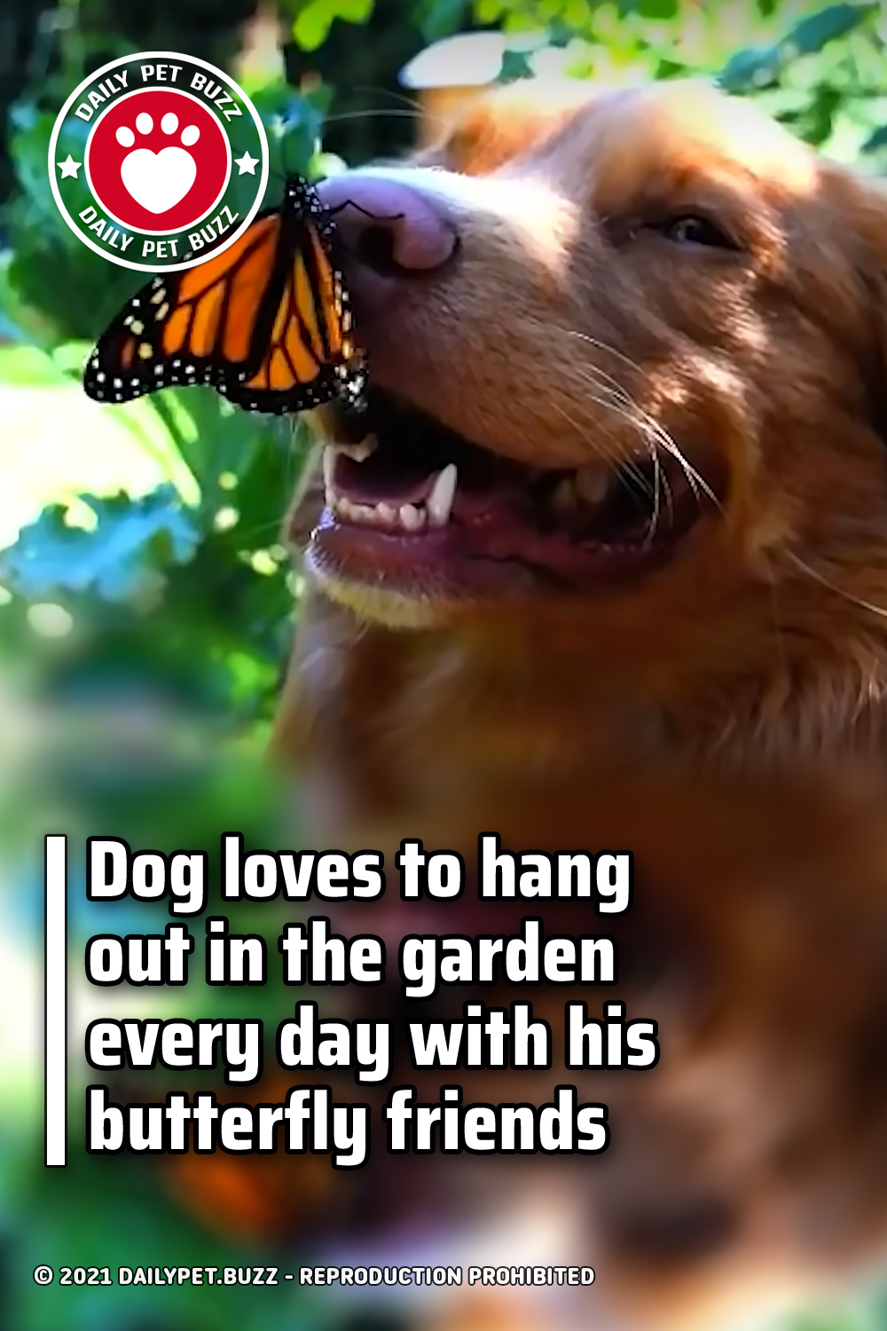 Dog loves to hang out in the garden every day with his butterfly friends