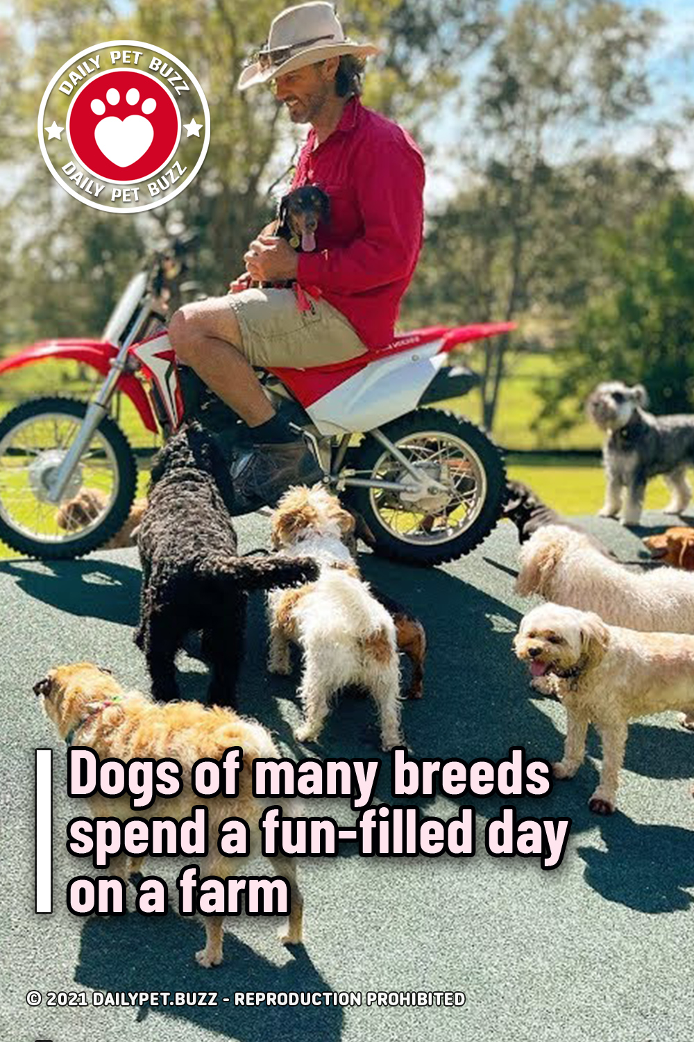Dogs of many breeds spend a fun-filled day on a farm