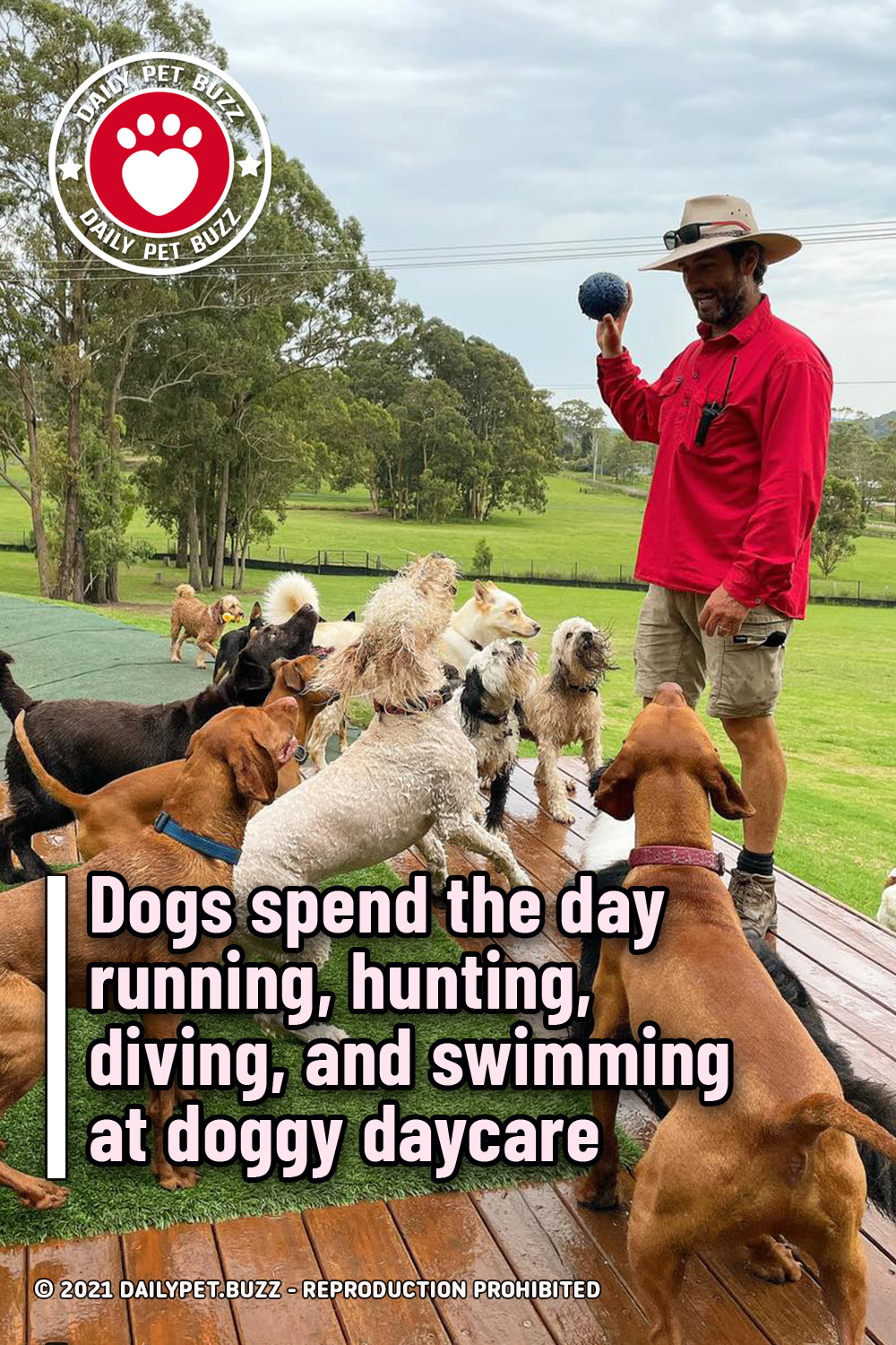 Dogs spend the day running, hunting, diving, and swimming at doggy daycare