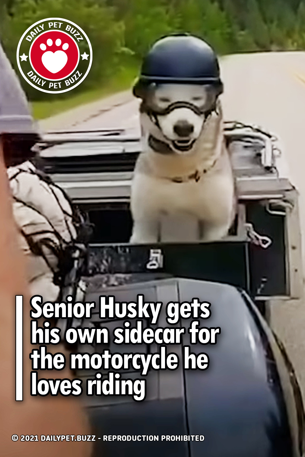 Senior Husky gets his own sidecar for the motorcycle he loves riding