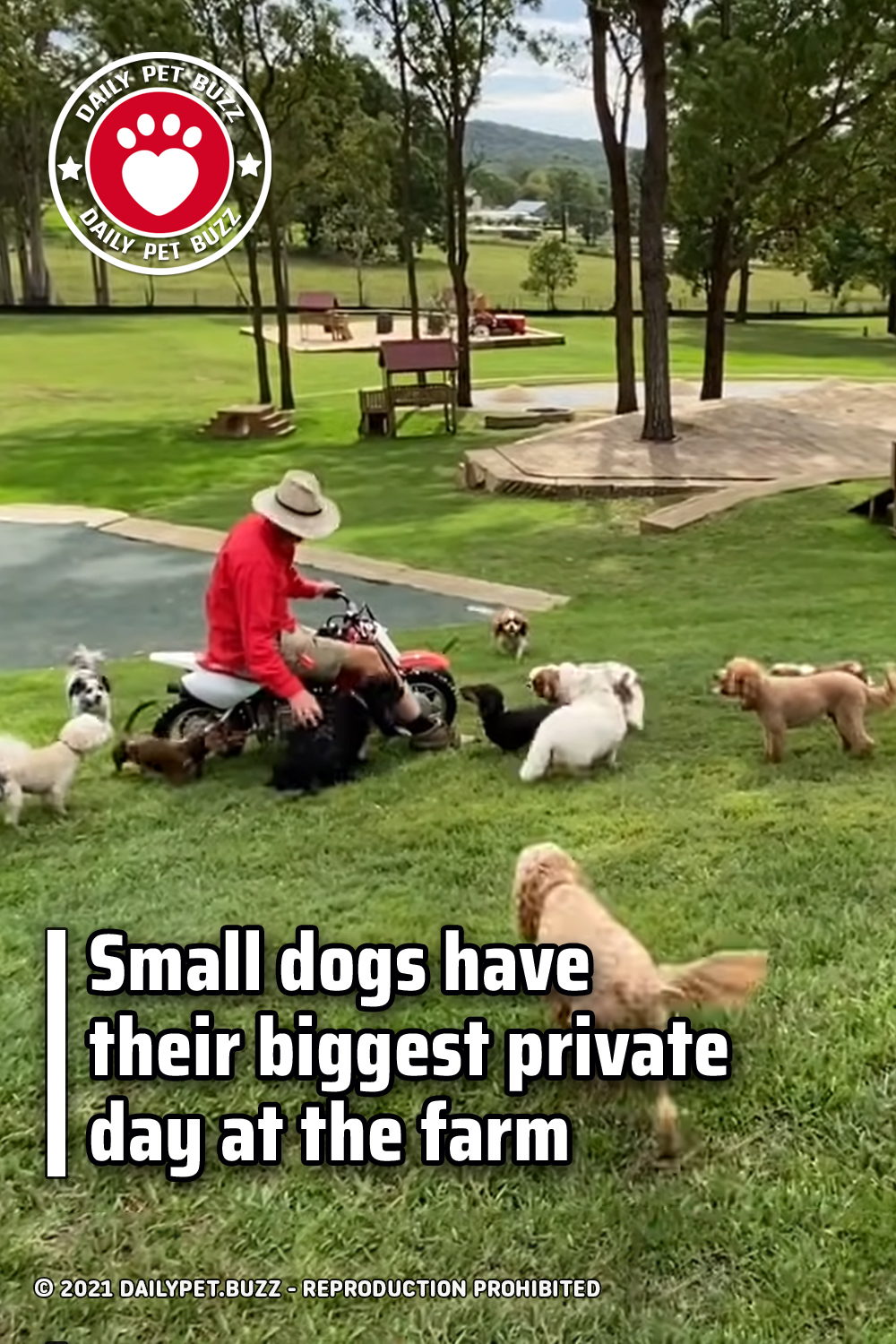 Small dogs have their biggest private day at the farm
