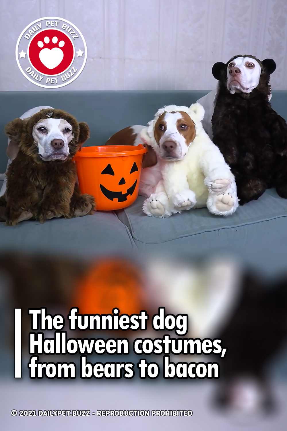 The funniest dog Halloween costumes, from bears to bacon