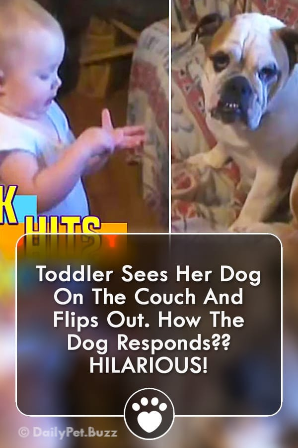 Toddler Sees Her Dog On The Couch And Flips Out. How The Dog Responds?? HILARIOUS!