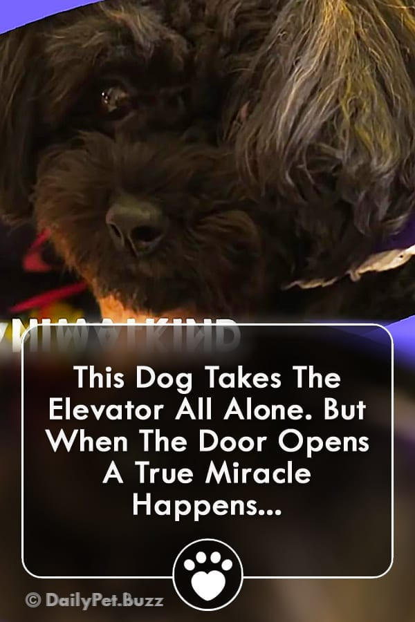 This Dog Takes The Elevator All Alone. But When The Door Opens A True Miracle Happens...