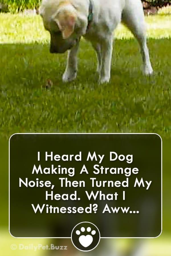 I Heard My Dog Making A Strange Noise, Then Turned My Head. What I Witnessed? Aww...