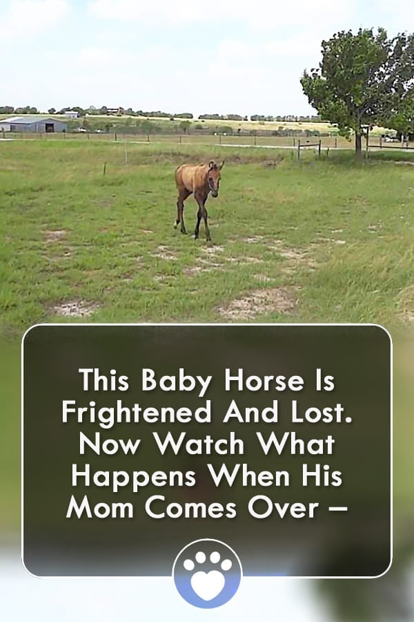 This Baby Horse Is Frightened And Lost. Now Watch What Happens When His Mom Comes Over –