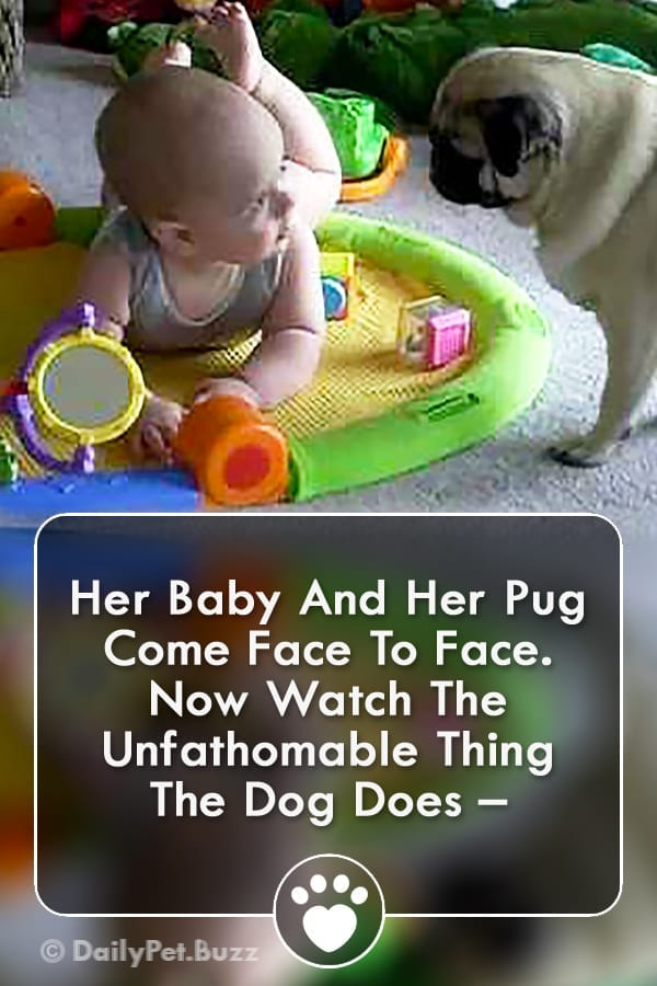 Her Baby And Her Pug Come Face To Face. Now Watch The Unfathomable Thing The Dog Does –