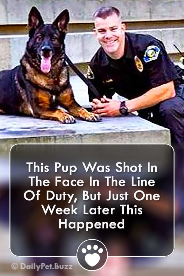 This Pup Was Shot In The Face In The Line Of Duty, But Just One Week Later This Happened