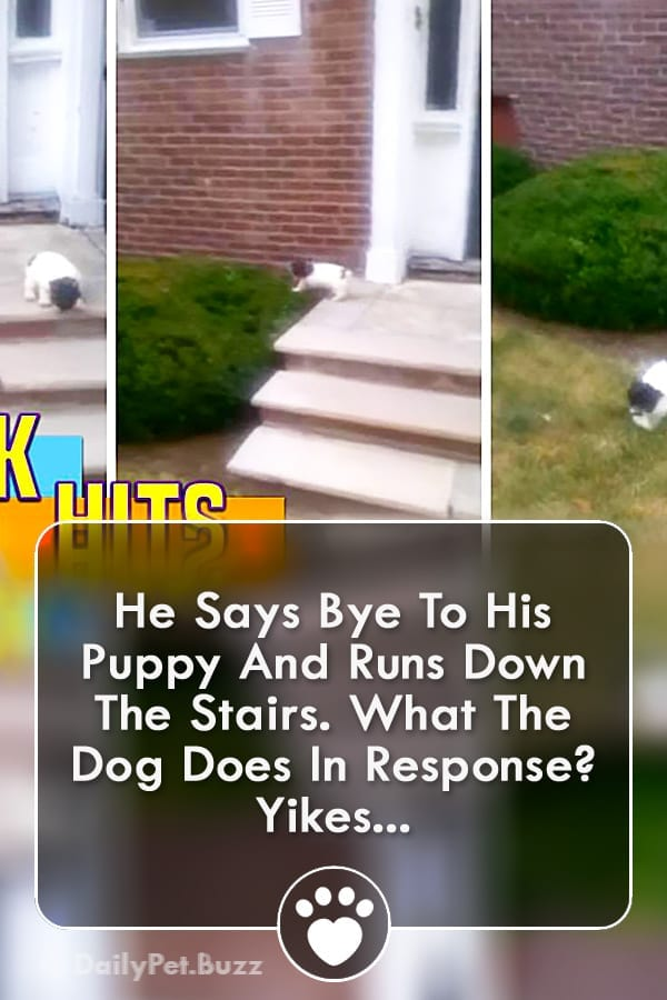He Says Bye To His Puppy And Runs Down The Stairs. What The Dog Does In Response? Yikes...