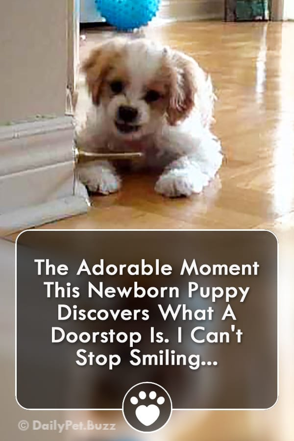The Adorable Moment This Newborn Puppy Discovers What A Doorstop Is. I Can\'t Stop Smiling...