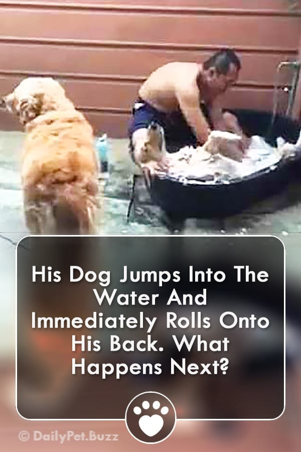 His Dog Jumps Into The Water And Immediately Rolls Onto His Back. What Happens Next?