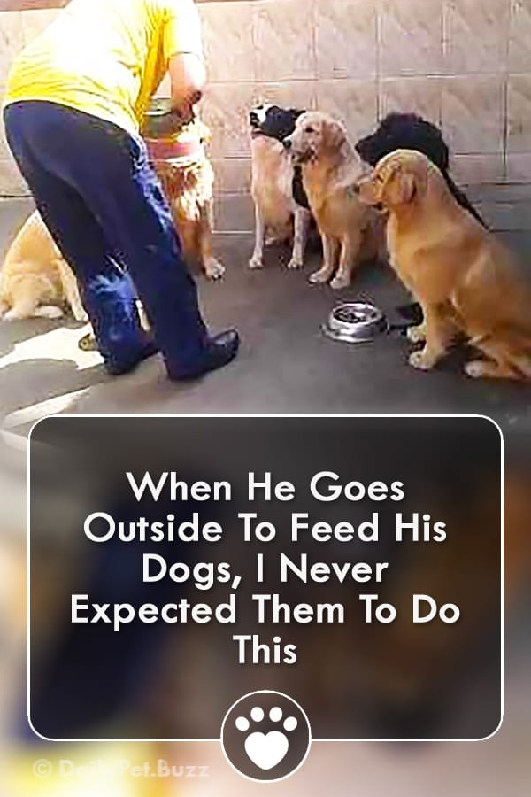 When He Goes Outside To Feed His Dogs, I Never Expected Them To Do This