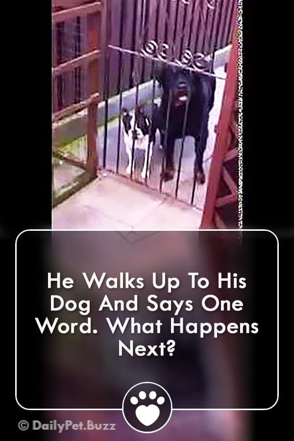 He Walks Up To His Dog And Says One Word. What Happens Next?