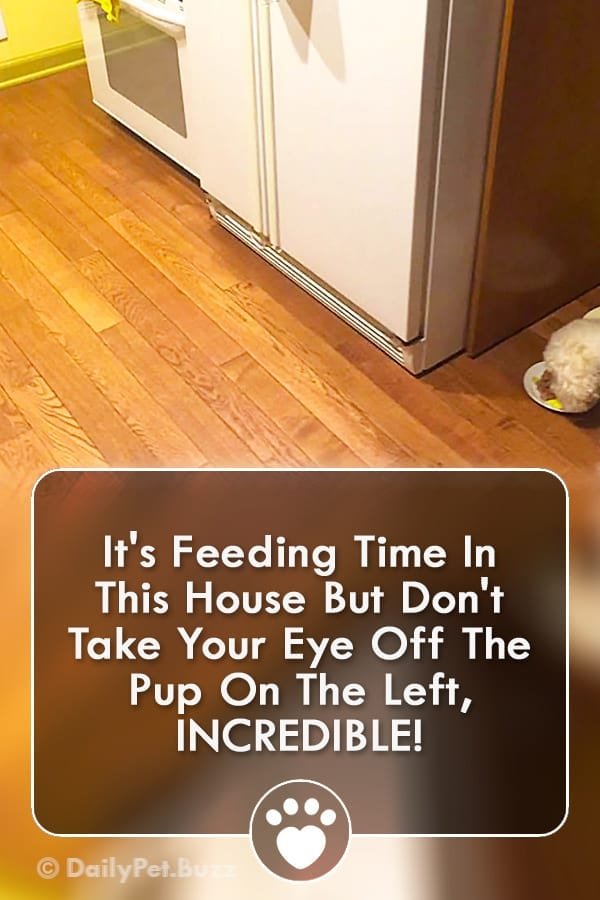 It\'s Feeding Time In This House But Don\'t Take Your Eye Off The Pup On The Left, INCREDIBLE!