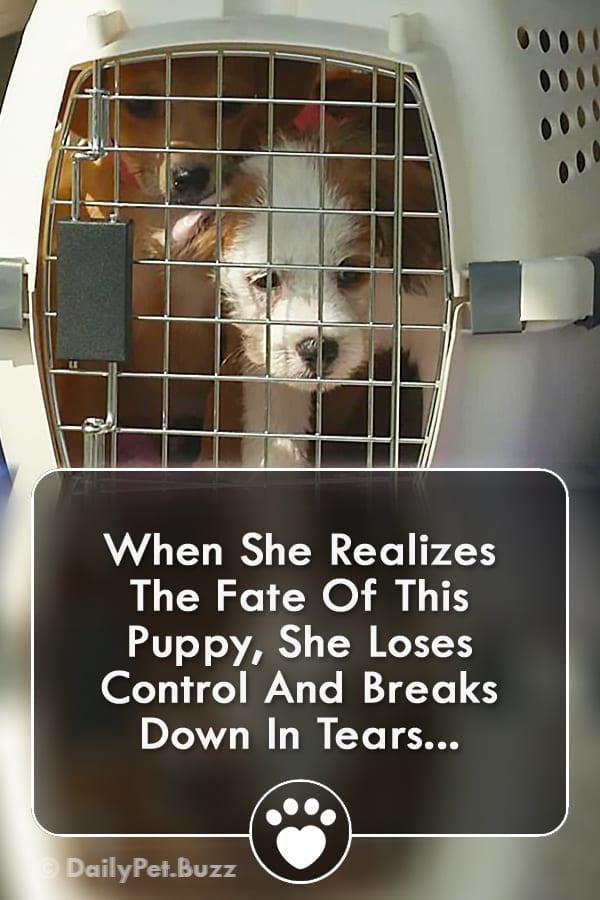 When She Realizes The Fate Of This Puppy, She Loses Control And Breaks Down In Tears...