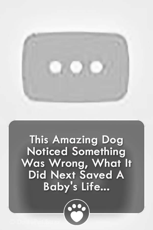 This Amazing Dog Noticed Something Was Wrong, What It Did Next Saved A Baby\'s Life...