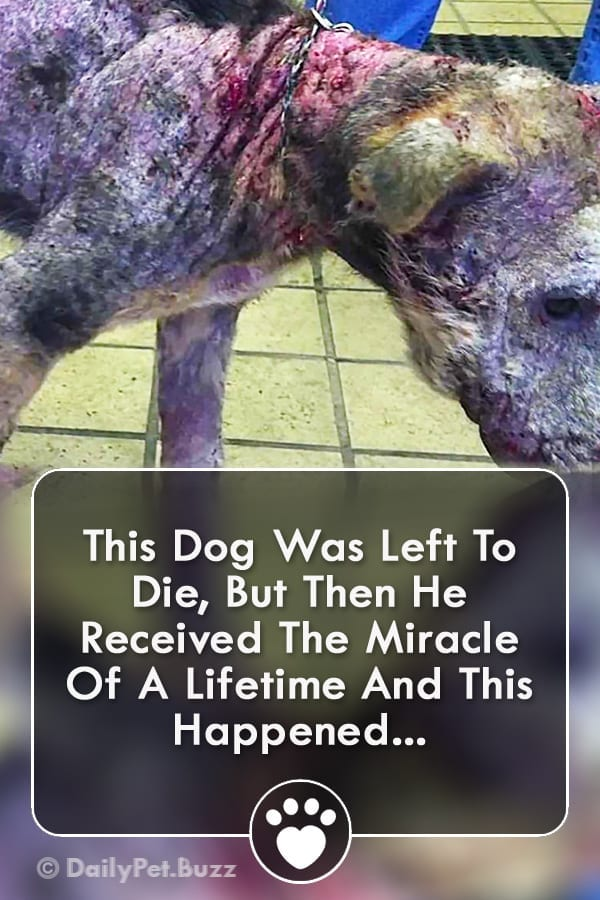This Dog Was Left To Die, But Then He Received The Miracle Of A Lifetime And This Happened...