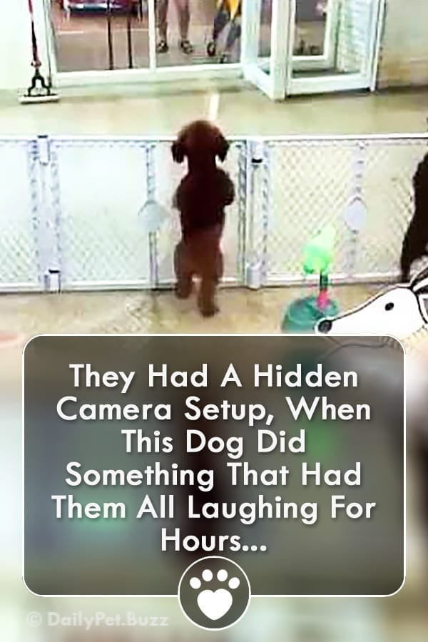 They Had A Hidden Camera Setup, When This Dog Did Something That Had Them All Laughing For Hours...