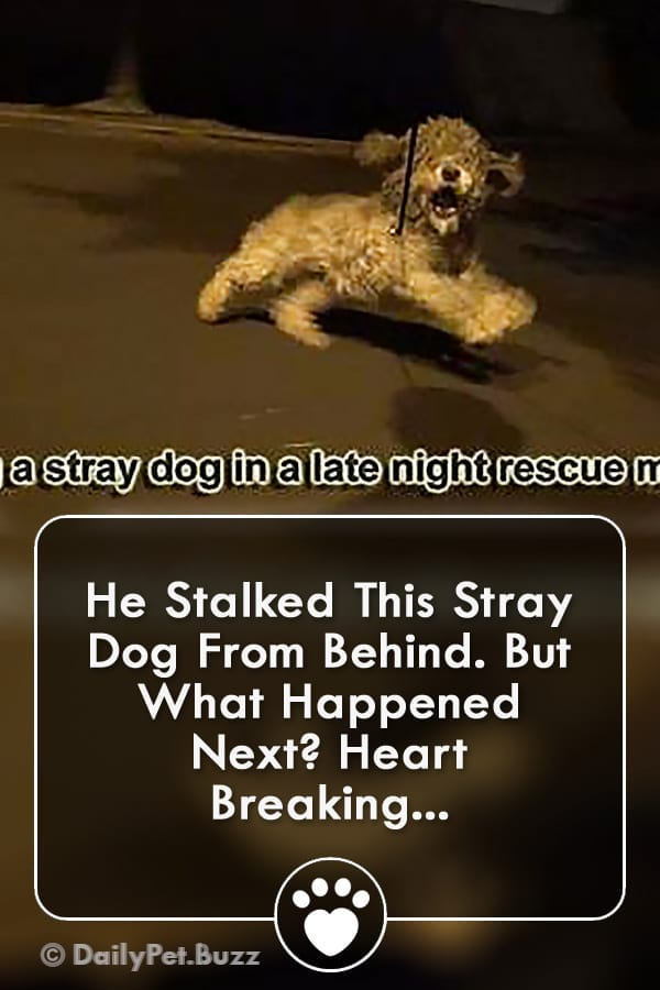 He Stalked This Stray Dog From Behind. But What Happened Next? Heart Breaking...