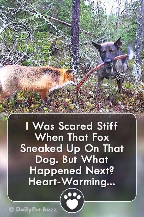 I Was Scared Stiff When That Fox Sneaked Up On That Dog. But What Happened Next? Heart-Warming...