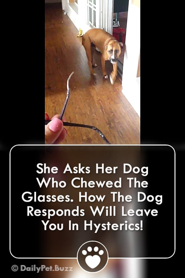 She Asks Her Dog Who Chewed The Glasses. How The Dog Responds Will Leave You In Hysterics!