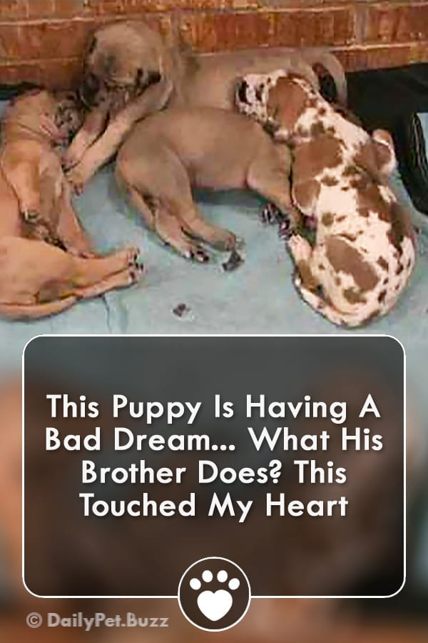 This Puppy Is Having A Bad Dream... What His Brother Does? This Touched My Heart