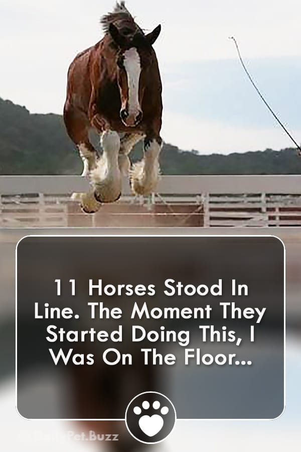 11 Horses Stood In Line. The Moment They Started Doing This, I Was On The Floor...