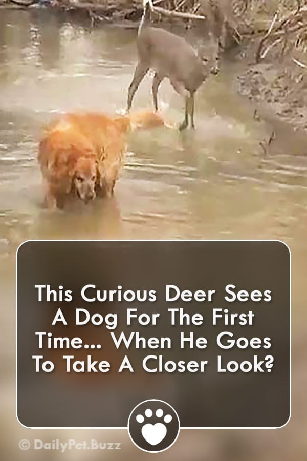 This Curious Deer Sees A Dog For The First Time... When He Goes To Take A Closer Look?