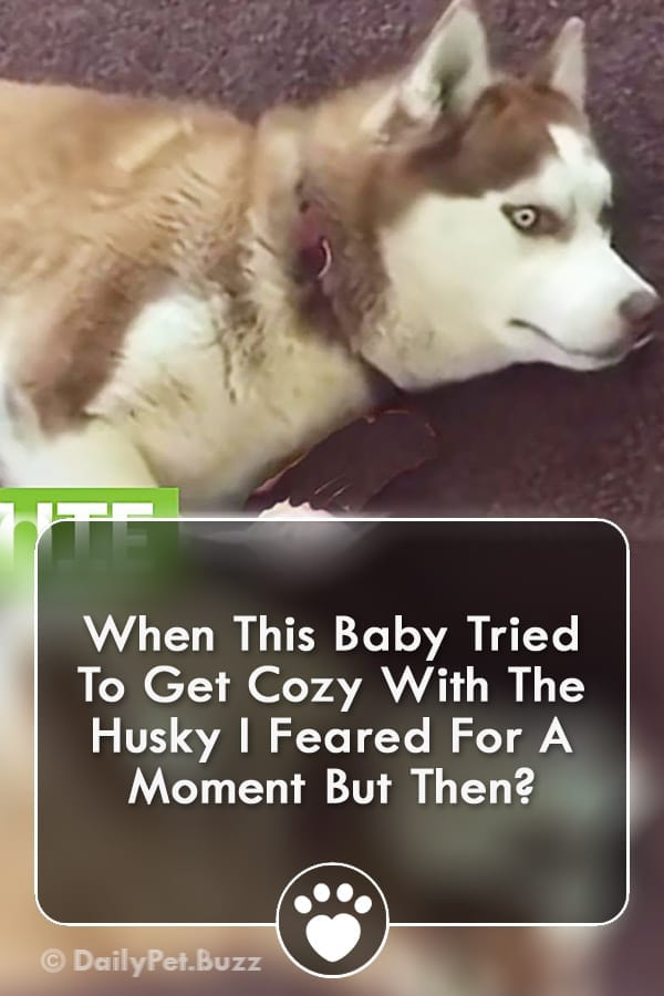 When This Baby Tried To Get Cozy With The Husky I Feared For A Moment But Then?