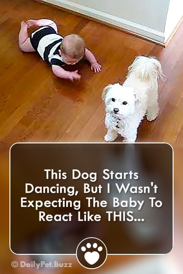 This Dog Starts Dancing, But I Wasn\'t Expecting The Baby To React Like THIS...