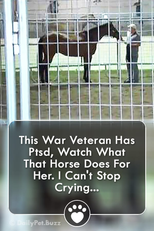 This War Veteran Has Ptsd, Watch What That Horse Does For Her. I Can\'t Stop Crying...