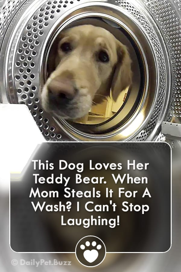This Dog Loves Her Teddy Bear. When Mom Steals It For A Wash? I Can\'t Stop Laughing!