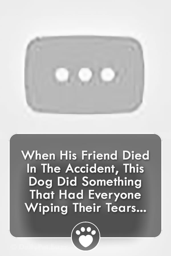 When His Friend Died In The Accident, This Dog Did Something That Had Everyone Wiping Their Tears...