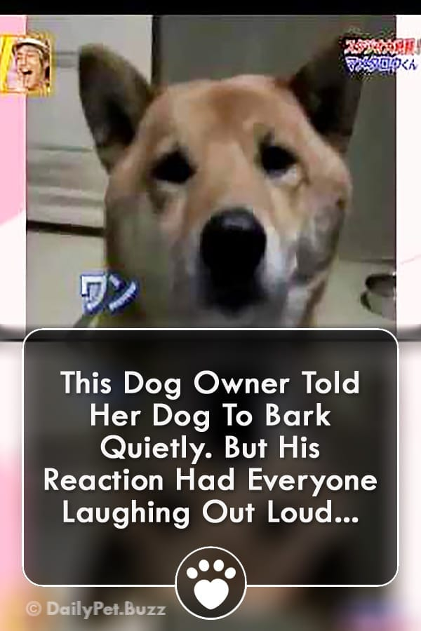 This Dog Owner Told Her Dog To Bark Quietly. But His Reaction Had Everyone Laughing Out Loud...