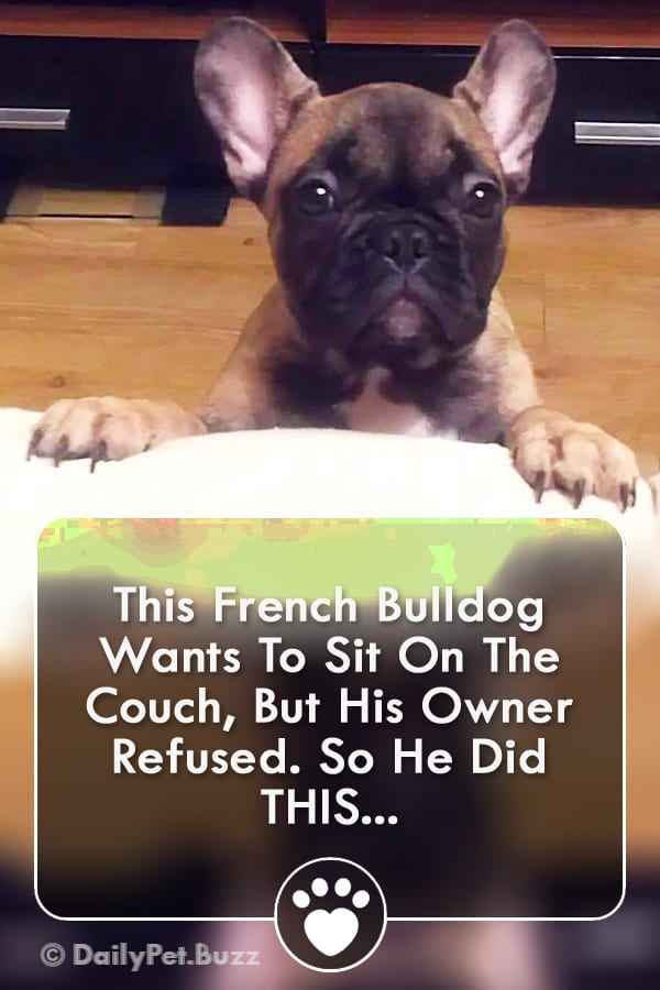 This French Bulldog Wants To Sit On The Couch, But His Owner Refused. So He Did THIS...
