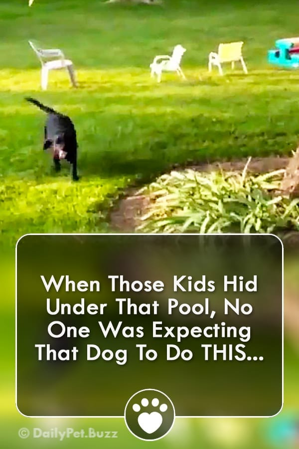 When Those Kids Hid Under That Pool, No One Was Expecting That Dog To Do THIS...