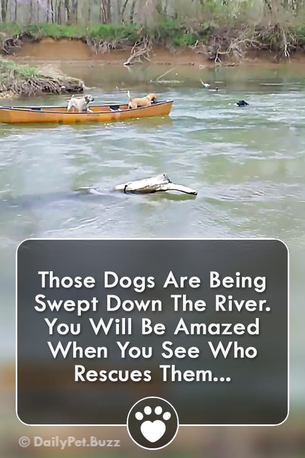 Those Dogs Are Being Swept Down The River. You Will Be Amazed When You See Who Rescues Them...
