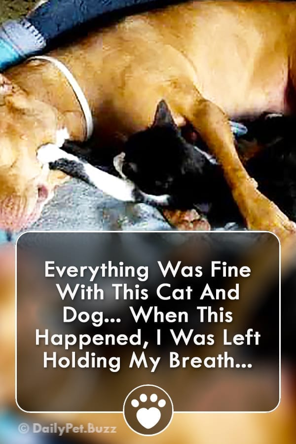 Everything Was Fine With This Cat And Dog... When This Happened, I Was Left Holding My Breath...