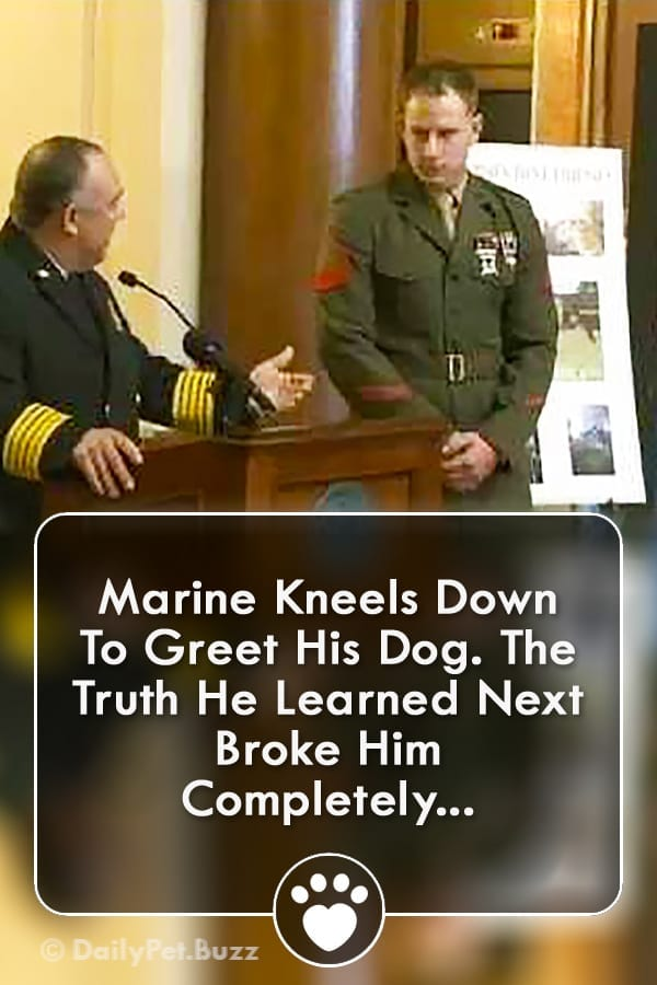 Marine Kneels Down To Greet His Dog. The Truth He Learned Next Broke Him Completely...