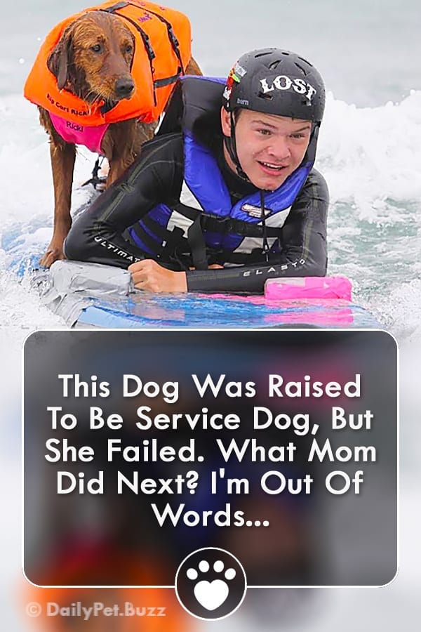 This Dog Was Raised To Be Service Dog, But She Failed. What Mom Did Next? I\'m Out Of Words...