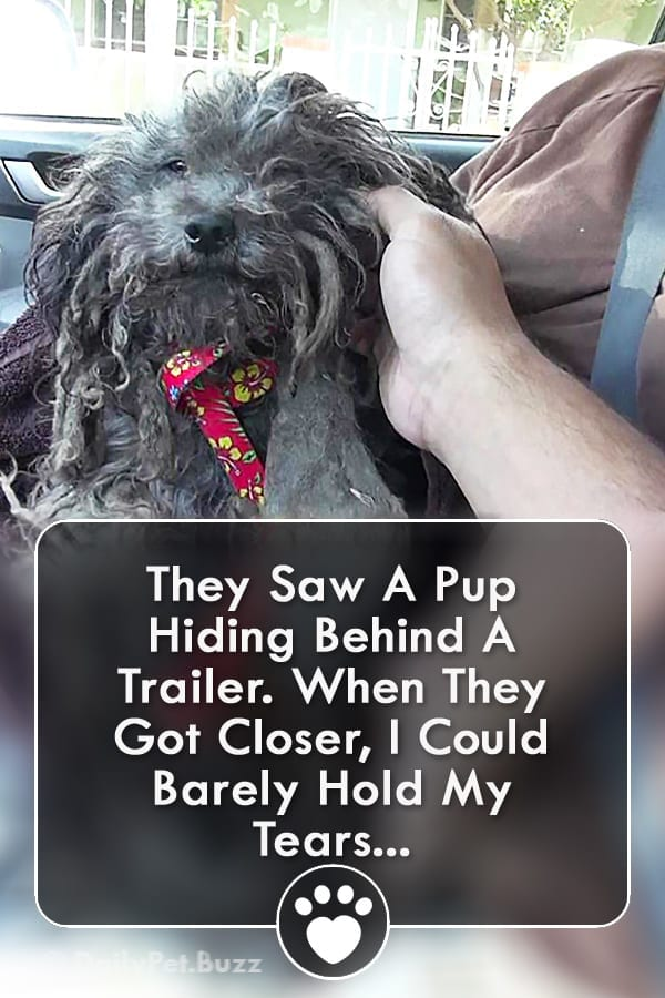 They Saw A Pup Hiding Behind A Trailer. When They Got Closer, I Could Barely Hold My Tears...