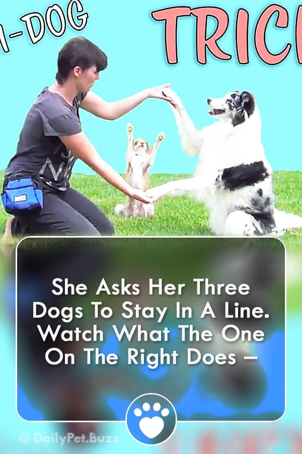 She Asks Her Three Dogs To Stay In A Line. Watch What The One On The Right Does –