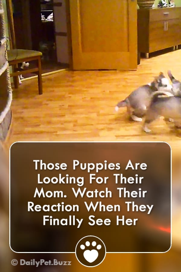 Those Puppies Are Looking For Their Mom. Watch Their Reaction When They Finally See Her