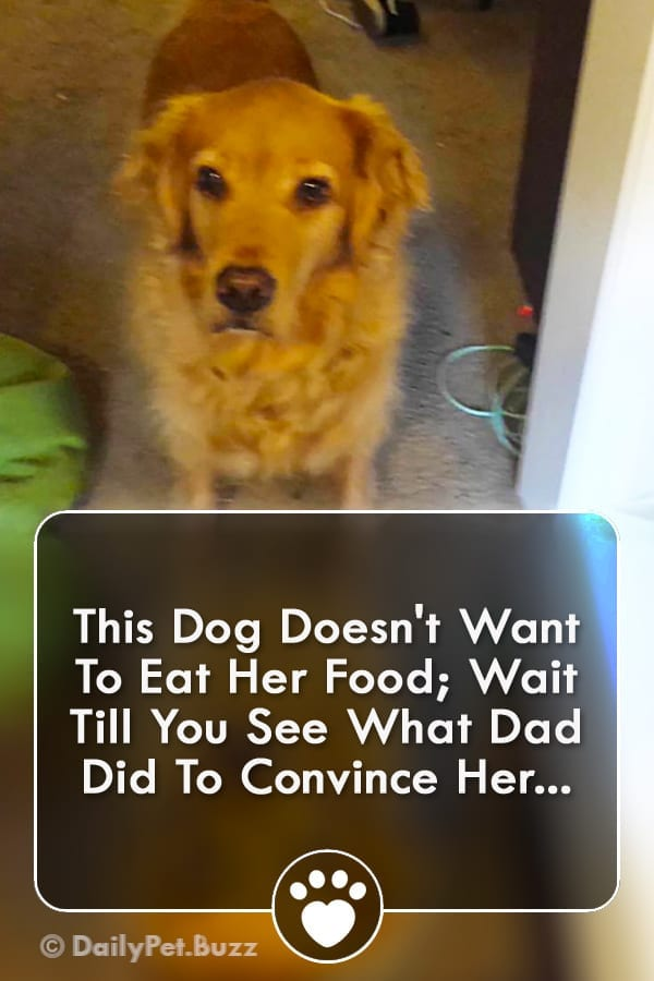 This Dog Doesn\'t Want To Eat Her Food; Wait Till You See What Dad Did To Convince Her...