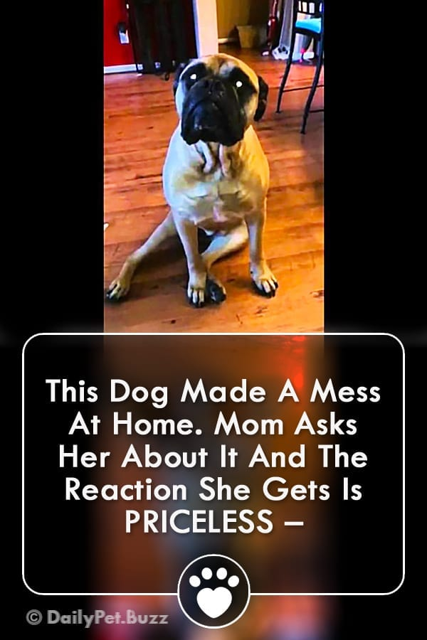 This Dog Made A Mess At Home. Mom Asks Her About It And The Reaction She Gets Is PRICELESS –